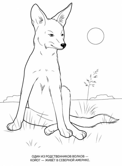 раскраска волк 22 13
