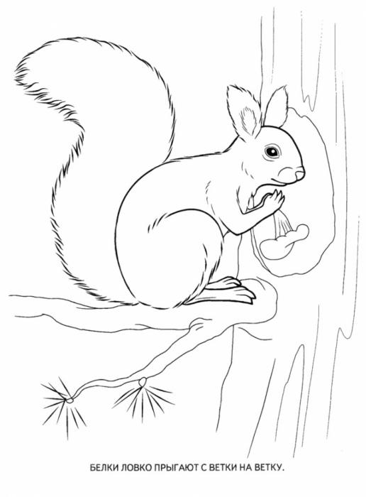 раскраска животные леса обсуждение на Liveinternet
