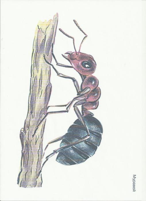 как знакомить детей с насекомыми