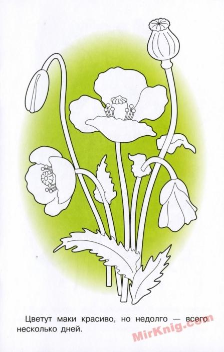 """""""Лесные и полевые цветы"""" - раскраска.. Обсуждение на ..."""