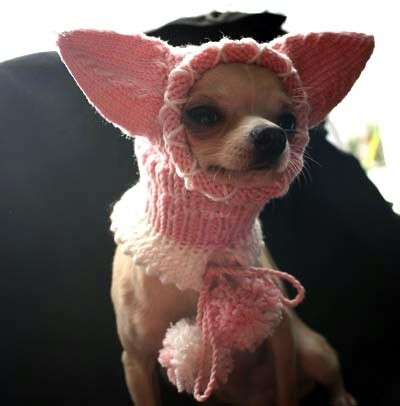 вязание спицами вязание для собак схемы